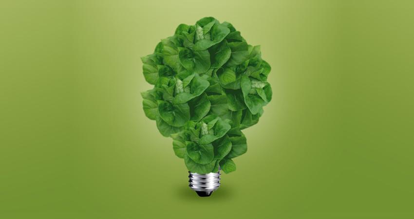 lettuce bulb